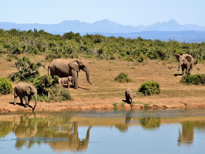 Startling Info About African Safari Tours Uncovered